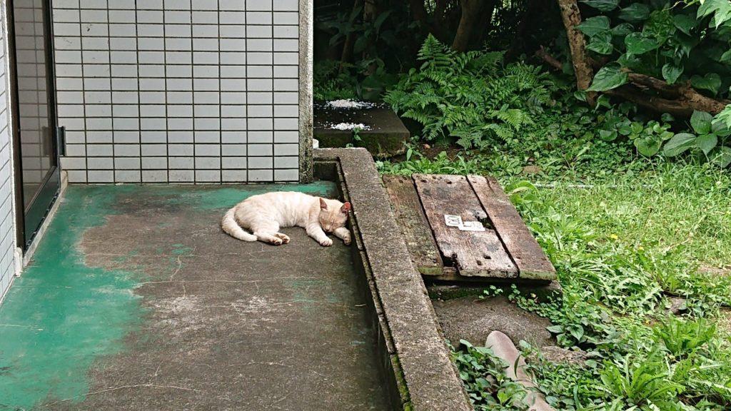 足摺岬 猫